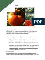 Como Cultivar Tomates No Jardim
