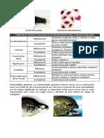Reconocimiento de Enfermedades (Patologia Junin)