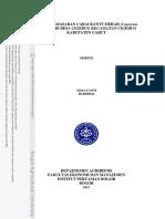 Sistem Pemasaran Cabai Rawit Merah (Capsicum