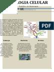 PDF Biologia Celular Periodico Fisioterapia