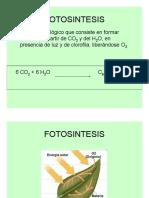 Proceso Fotosintético