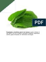 hierbas plantas medicinales