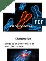 BM Cromosomas