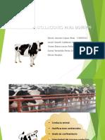 Exposicion Diseno de Estructuras Para Bovinos (1)