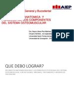 2. Descripcion Anatomica de Los Componentes Del Sistema Osteomuscular