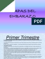 etapasdelembarazo-120926192553-phpapp01