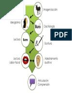 Comunicación Total Proximal- Proceso