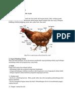 Anatomi Dan Fisiologi Ayam