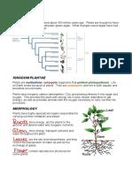 D11 - Kingdom Plantae (Solutions)