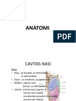 ANATOMI Sinus