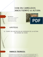 Gestacion e Camelidos Sudamericanos