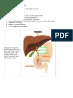 Pulizia Il Fegato e La Cistifellea