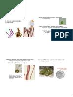 3-Algal Morphology 14 4