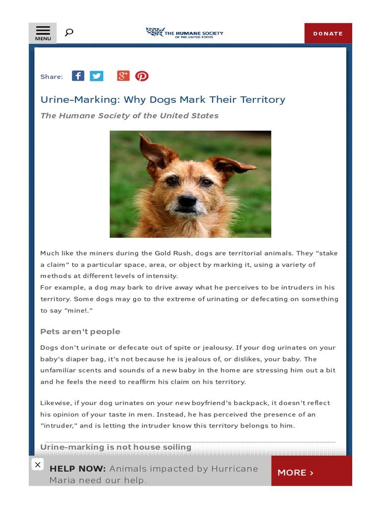 Urine Marking html | Urination | Dogs