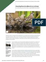 Cada Año Se Matan de Forma Ilegal Hasta Dos Millones de Aves en Europa _ Ciencia _ EL PAÍS