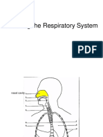 labeling respiratory system