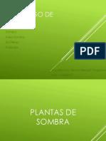 Catalogo de Plantas COMPLETO