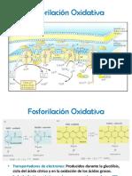 fosforilacin oxidativa