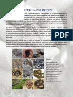 Herpetofauna de Itesi