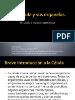 La Célula y Sus Organelas