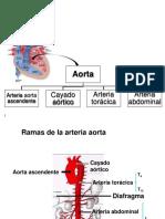 Unidad 5 Arterias