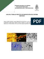 Guia Trabajo Practico Microscopia 2015