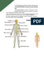 Sistema Nervioso Partes