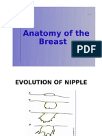 Anatomy of the Breast (breastfeeding)