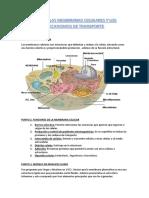 Resumen Tema 2 Fisiologia