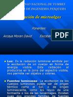 Iluminación de Microalgas
