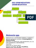 Neisseria-micobacterias
