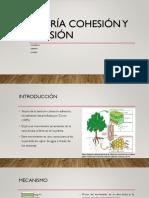 Cohesion y Tension PDF