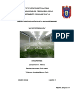 Micropropagación Reporte