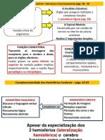5Cérebro ana  – p.p. 58-81 (1)