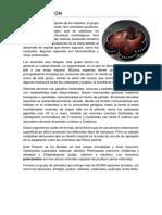 PHYLUM MOLLUSCA  -  Zoología