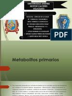 Metabolitos primarios lizzz