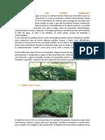 Qué Es Un Vivero Forestal[1]