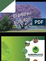 Usos de La Paulownia y Ventajas Version