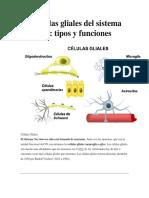 Las Células Gliales Del Sistema Nervioso