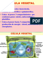 CELULAS VEGETALES