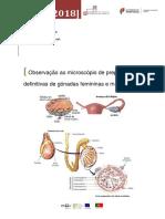 Observação de Preparações Definitivas de Gónadas Catarina