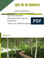 Tecnología de la madera MADERA 2010.ppt