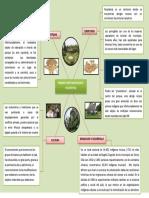 Mapa de Ideas_ Etnia Muisca