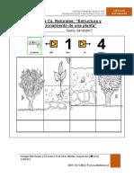1° PRUEBA CIENCIAS NATURALES PLANTAS NEP
