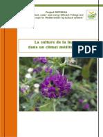 Lucerne Factsheet French 2604