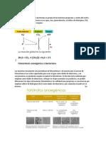 Fotosíntesis-anoxigenica