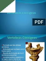 Vertebras Coccígeas