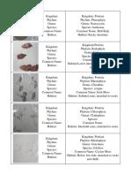 Algae Flashcards