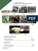 Taxonomia de animales