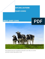 About Dairy Cows (1)